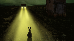 Rabbit in headlights shutdown stress reaction
